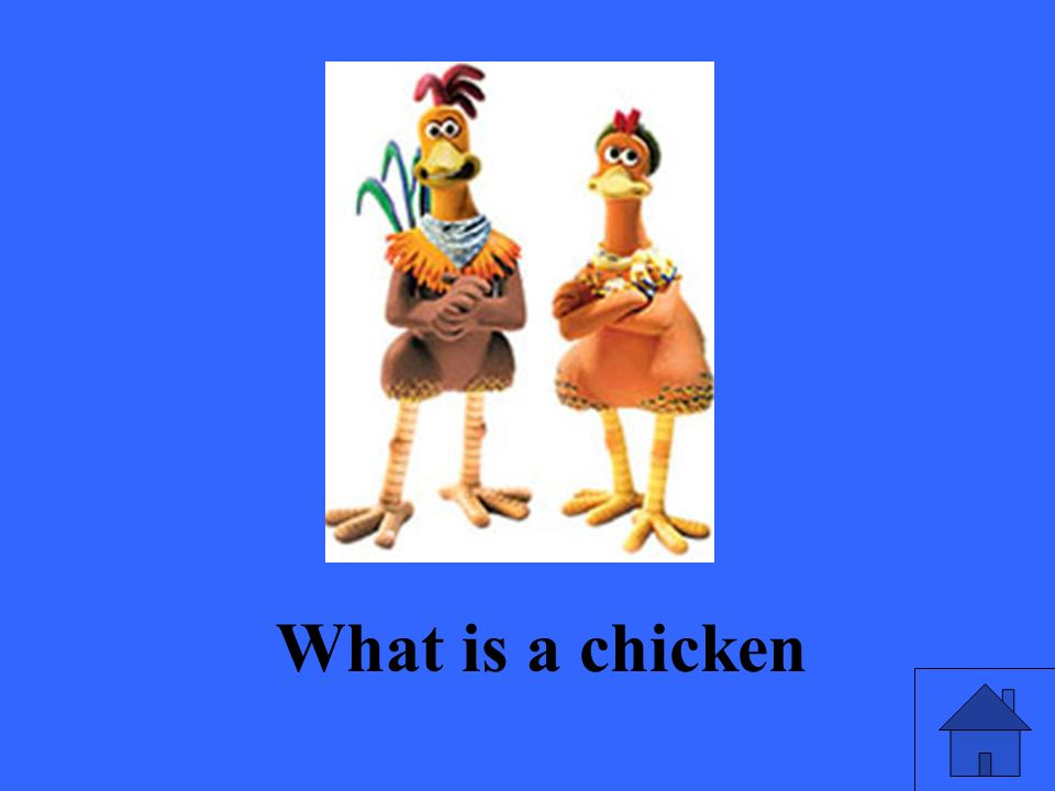What is a chicken