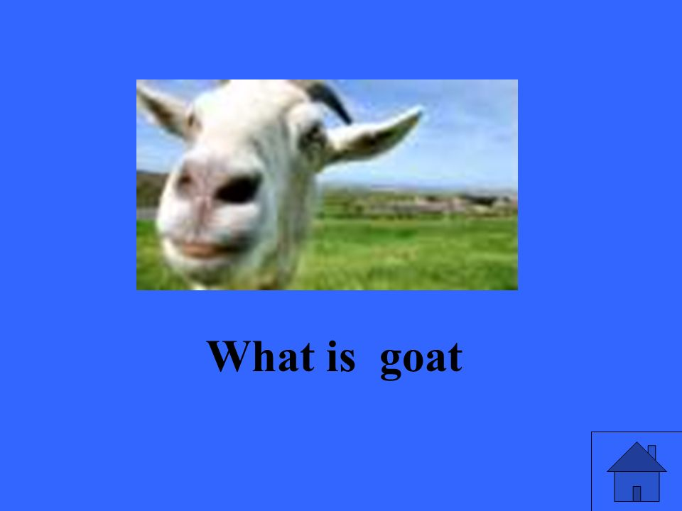 What is goat