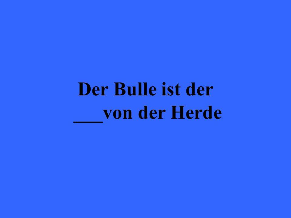 Der Bulle ist der ___von der Herde