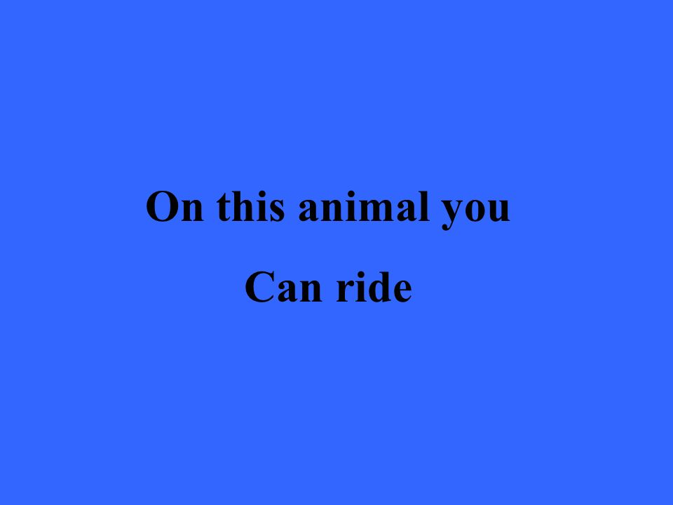 On this animal you Can ride