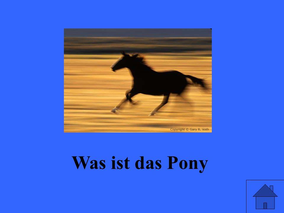 Was ist das Pony