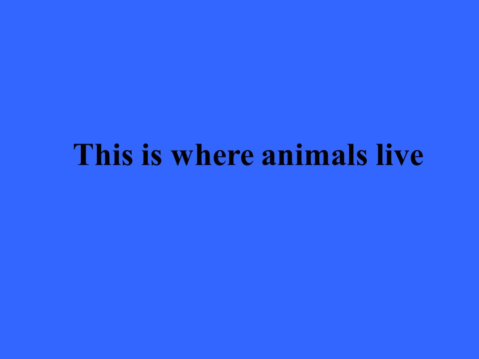 This is where animals live