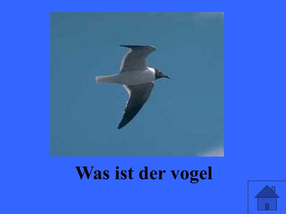 Was ist der vogel