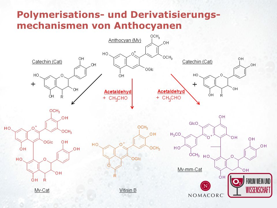 + Anthocyan (Mv) Catechin (Cat) Mv-CatVitisin B Mv-mm-Cat + Catechin (Cat) Polymerisations- und Derivatisierungs- mechanismen von Anthocyanen CH 3 CHO Acetaldehyd + CH 3 CHO Acetaldehyd +