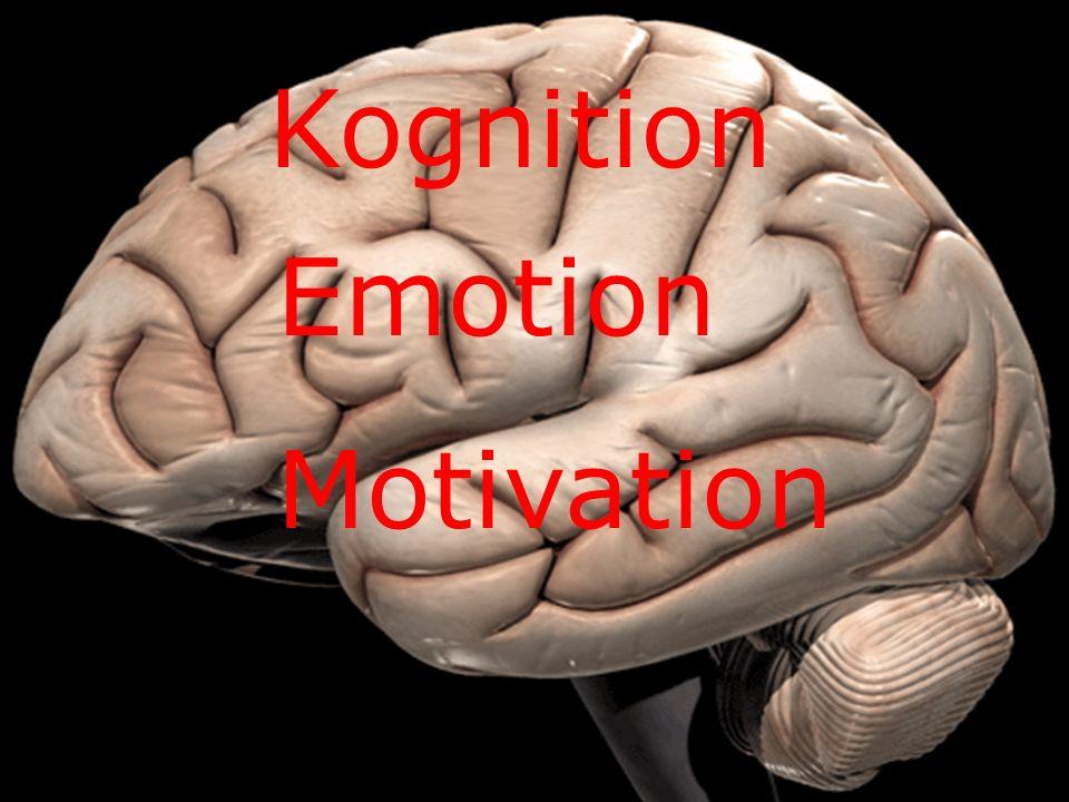Warum kognitiv? Kognition Emotion Motivation
