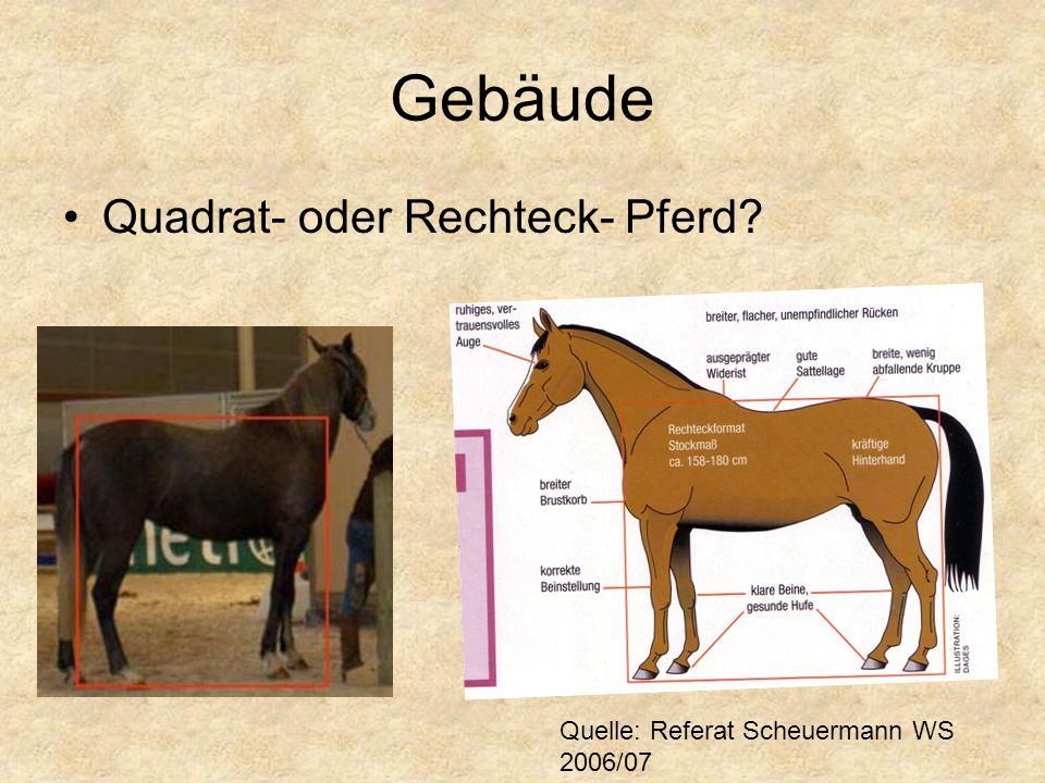 Quadrat- oder Rechteck- Pferd? Quelle: Referat Scheuermann WS 2006/07