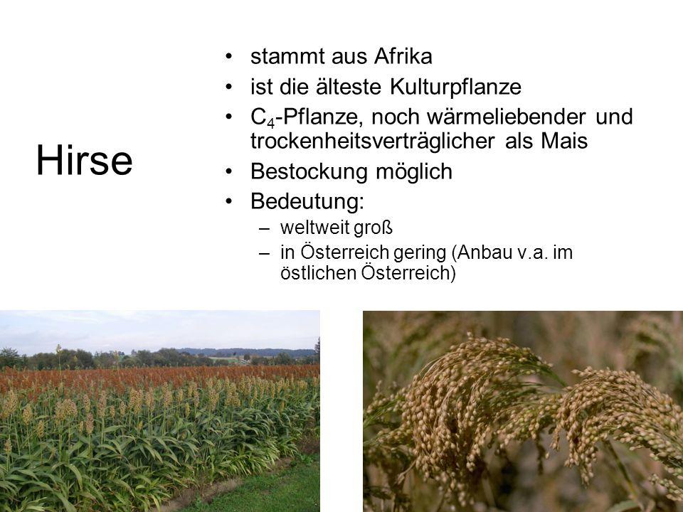 stammt aus Afrika ist die älteste Kulturpflanze C 4 -Pflanze, noch wärmeliebender und trockenheitsverträglicher als Mais Bestockung möglich Bedeutung: –weltweit groß –in Österreich gering (Anbau v.a.