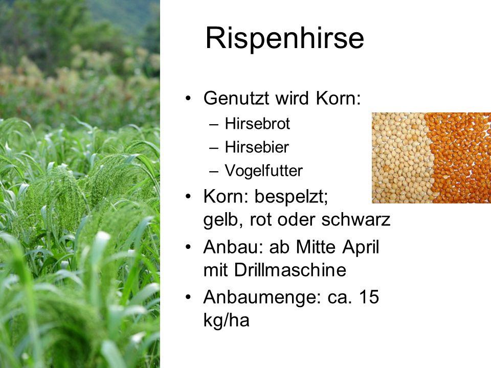 Rispenhirse Genutzt wird Korn: –Hirsebrot –Hirsebier –Vogelfutter Korn: bespelzt; gelb, rot oder schwarz Anbau: ab Mitte April mit Drillmaschine Anbaumenge: ca.