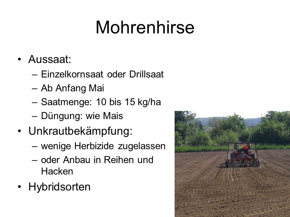 Mohrenhirse Aussaat: –Einzelkornsaat oder Drillsaat –Ab Anfang Mai –Saatmenge: 10 bis 15 kg/ha –Düngung: wie Mais Unkrautbekämpfung: –wenige Herbizide