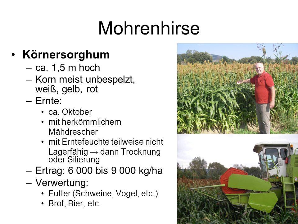 Mohrenhirse Körnersorghum –ca. 1,5 m hoch –Korn meist unbespelzt, weiß, gelb, rot –Ernte: ca. Oktober mit herkömmlichem Mähdrescher mit Erntefeuchte t