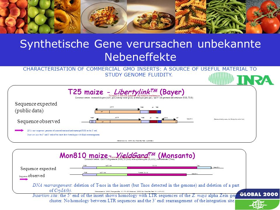 23 Synthetische Gene verursachen unbekannte Nebeneffekte CHARACTERISATION OF COMMERCIAL GMO INSERTS: A SOURCE OF USEFUL MATERIAL TO STUDY GENOME FLUIDITY.
