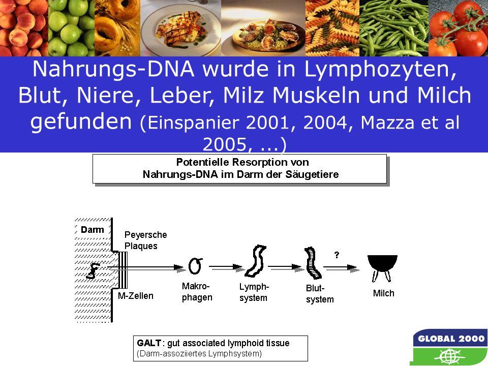 24 Nahrungs-DNA wurde in Lymphozyten, Blut, Niere, Leber, Milz Muskeln und Milch gefunden (Einspanier 2001, 2004, Mazza et al 2005,...)