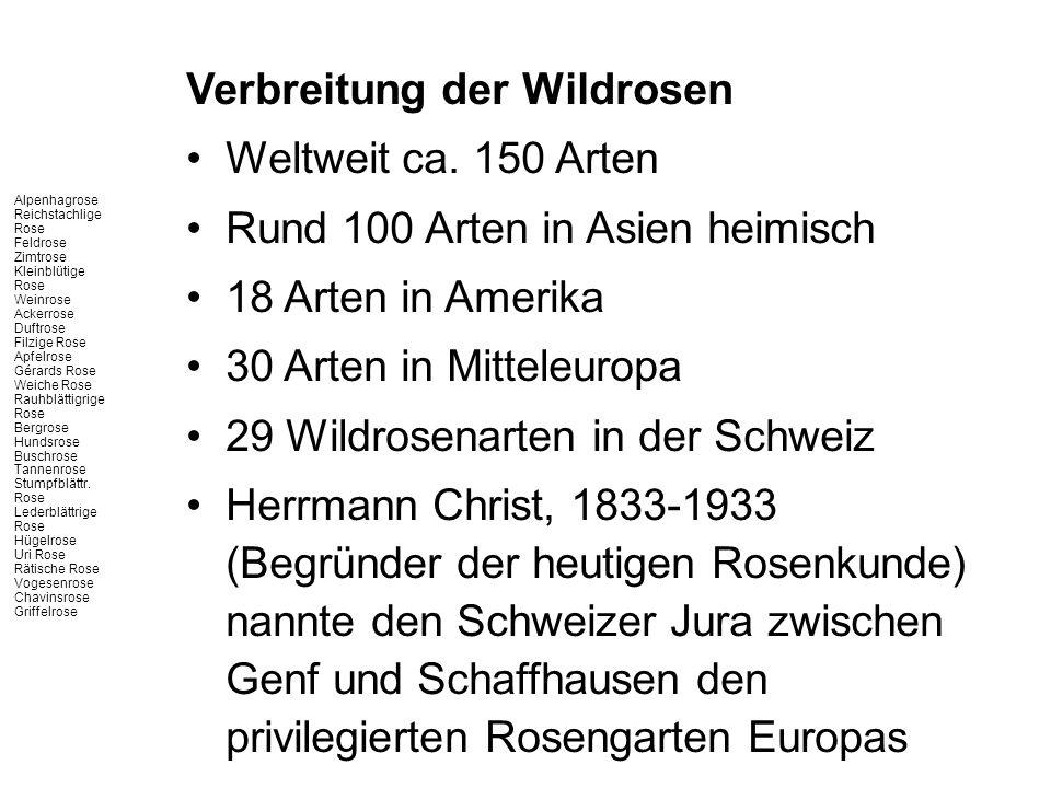 Verbreitung der Wildrosen Weltweit ca. 150 Arten Rund 100 Arten in Asien heimisch 18 Arten in Amerika 30 Arten in Mitteleuropa 29 Wildrosenarten in de