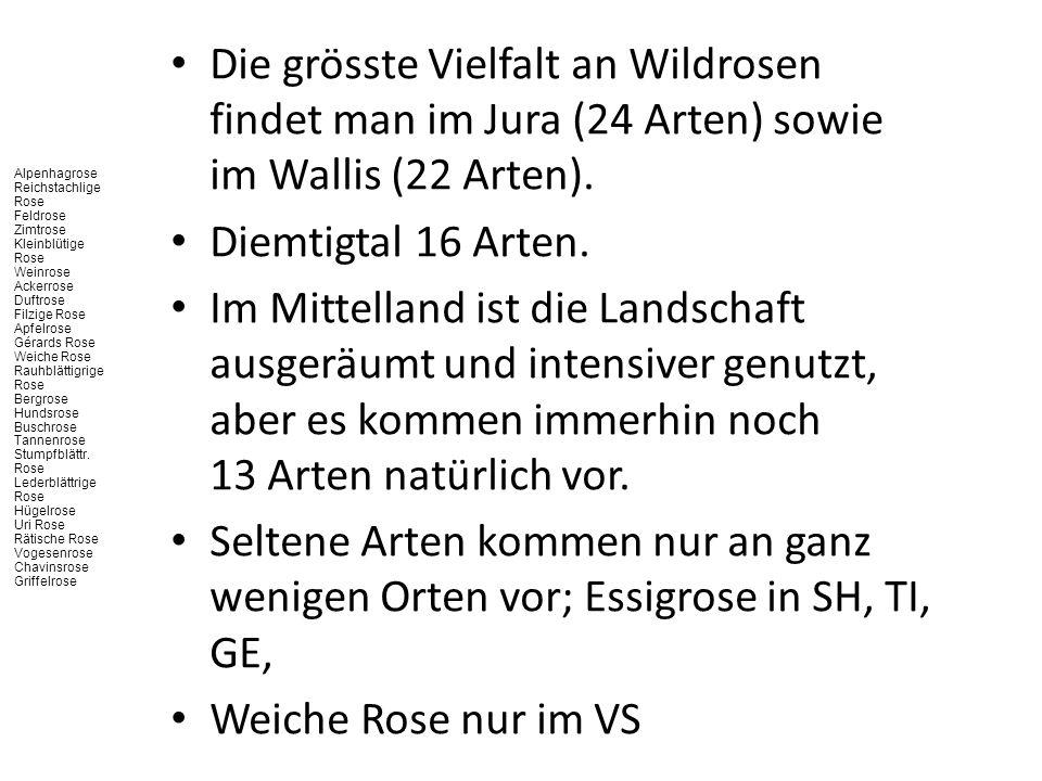 Die grösste Vielfalt an Wildrosen findet man im Jura (24 Arten) sowie im Wallis (22 Arten). Diemtigtal 16 Arten. Im Mittelland ist die Landschaft ausg