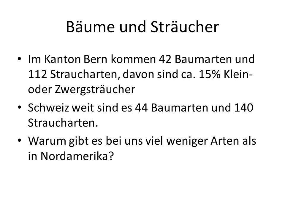 Bäume und Sträucher Im Kanton Bern kommen 42 Baumarten und 112 Straucharten, davon sind ca. 15% Klein- oder Zwergsträucher Schweiz weit sind es 44 Bau