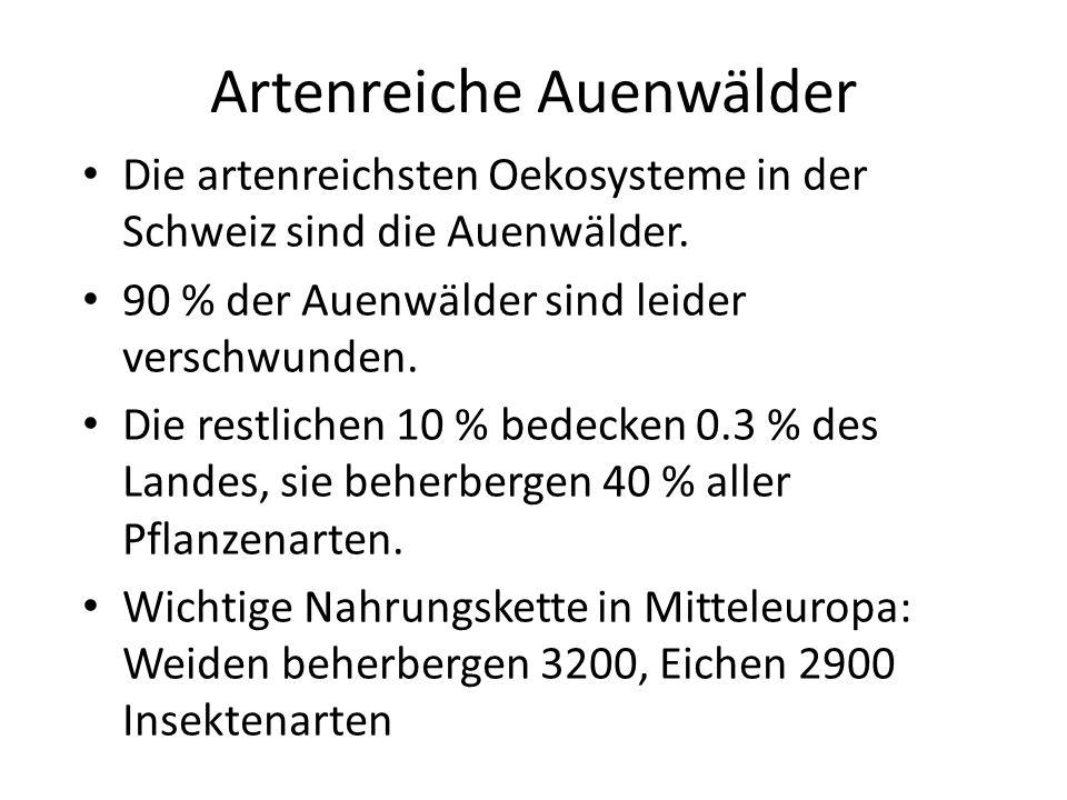 Artenreiche Auenwälder Die artenreichsten Oekosysteme in der Schweiz sind die Auenwälder. 90 % der Auenwälder sind leider verschwunden. Die restlichen