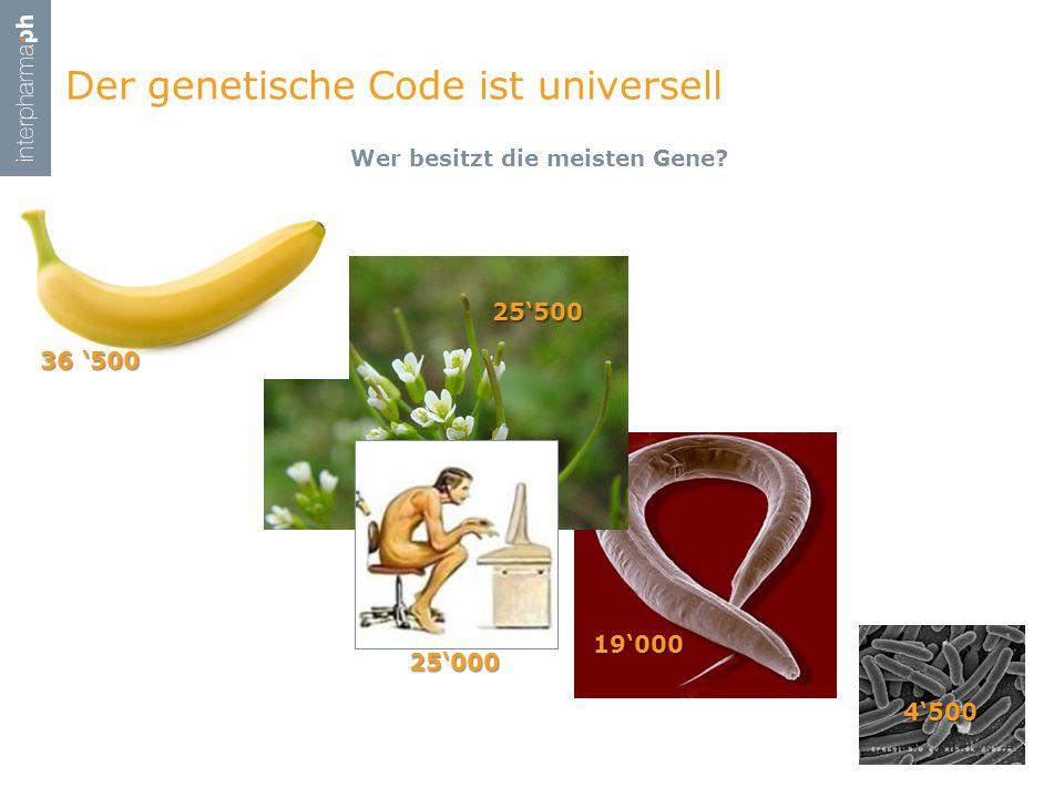 Wer besitzt die meisten Gene? Der genetische Code ist universell 5 4500 19000 25500 25000 36 500