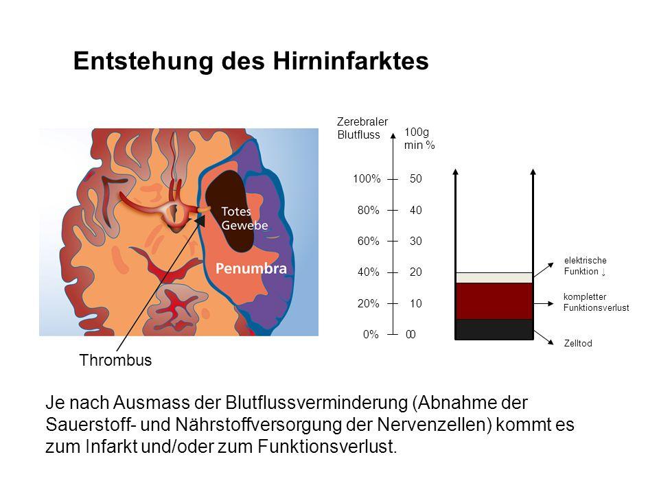 Entstehung des Hirninfarktes 100% 80% 60% 40% 20% 0%00 10 20 30 40 50 100g min % elektrische Funktion Zelltod kompletter Funktionsverlust Zerebraler B