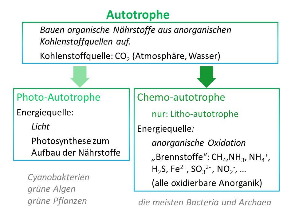 Bauen organische Nährstoffe aus anorganischen Kohlenstoffquellen auf. Kohlenstoffquelle: CO 2 (Atmosphäre, Wasser) Autotrophe Photo-Autotrophe Energie