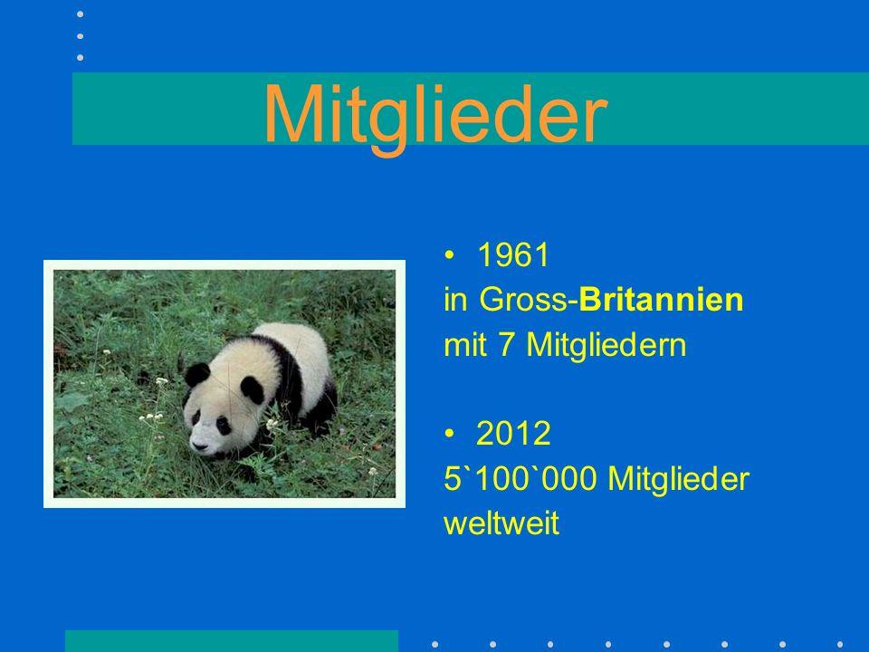 Das Panda-Logo Ein Tier das selten und bedroht war.