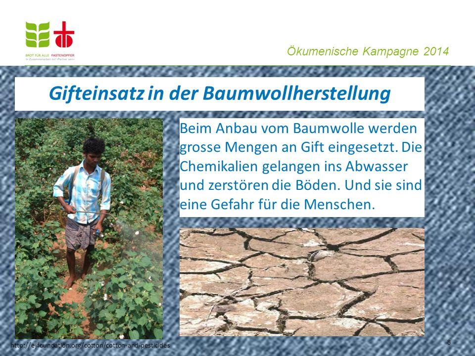 Ökumenische Kampagne 2014 8 Gifteinsatz in der Baumwollherstellung Beim Anbau vom Baumwolle werden grosse Mengen an Gift eingesetzt. Die Chemikalien g