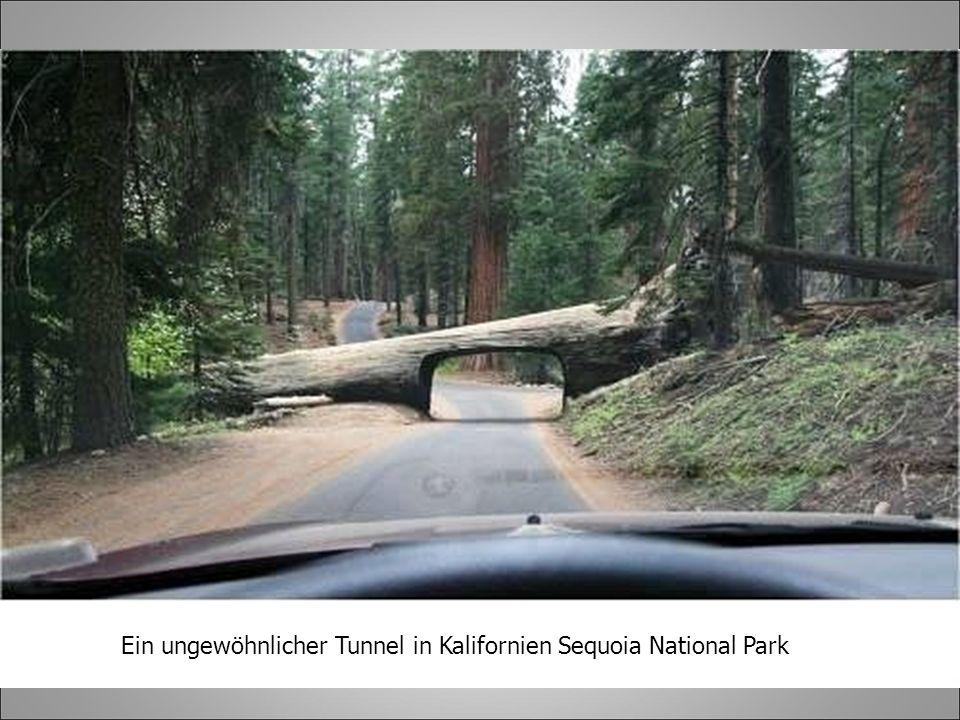 Ein ungewöhnlicher Tunnel in Kalifornien Sequoia National Park