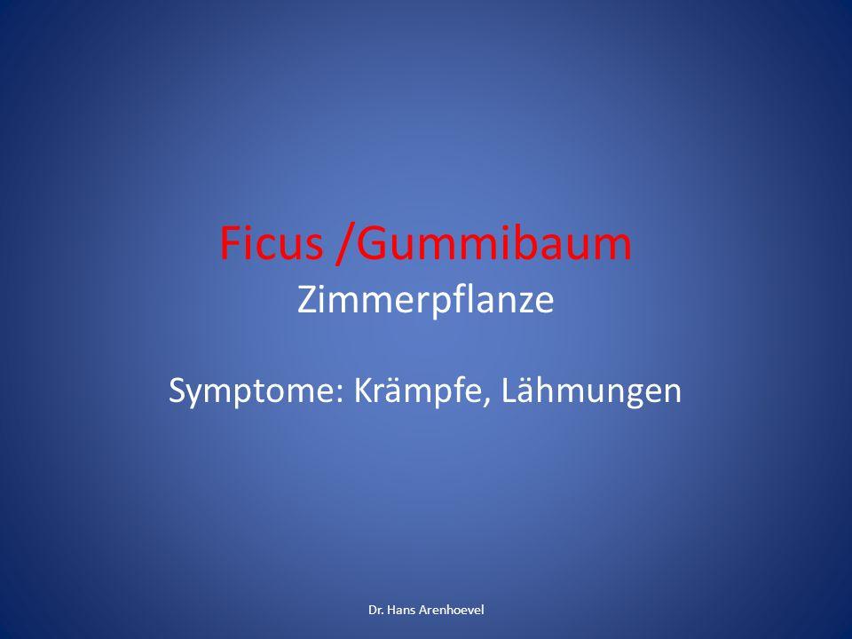 Ficus /Gummibaum Zimmerpflanze Symptome: Krämpfe, Lähmungen Dr. Hans Arenhoevel
