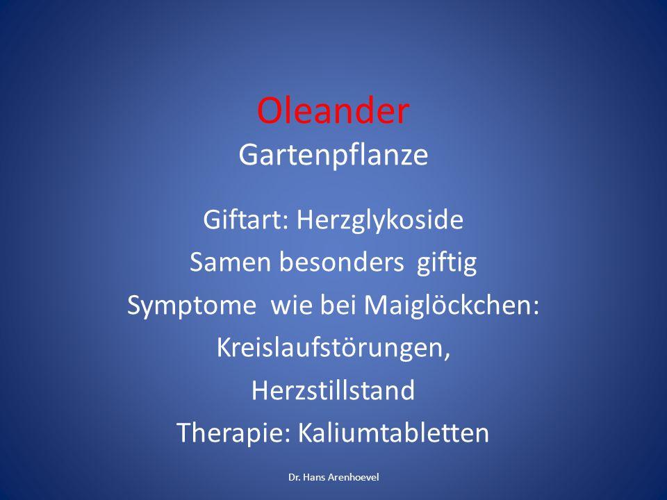 Oleander Gartenpflanze Giftart: Herzglykoside Samen besonders giftig Symptome wie bei Maiglöckchen: Kreislaufstörungen, Herzstillstand Therapie: Kaliu