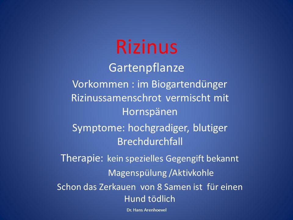Rizinus Gartenpflanze Vorkommen : im Biogartendünger Rizinussamenschrot vermischt mit Hornspänen Symptome: hochgradiger, blutiger Brechdurchfall Thera