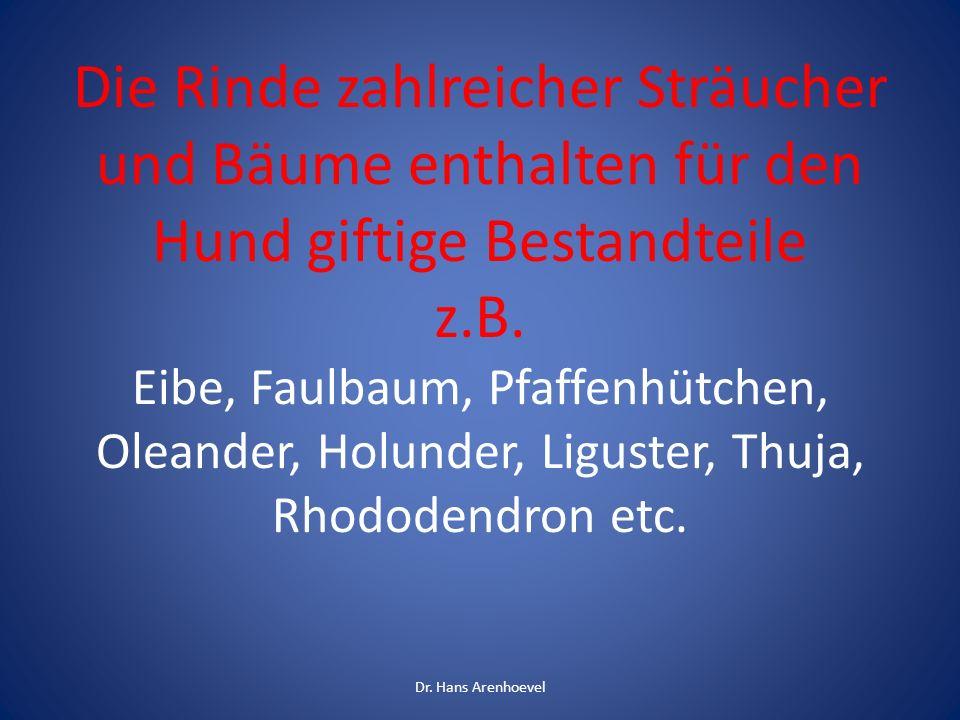 Die Rinde zahlreicher Sträucher und Bäume enthalten für den Hund giftige Bestandteile z.B. Eibe, Faulbaum, Pfaffenhütchen, Oleander, Holunder, Liguste