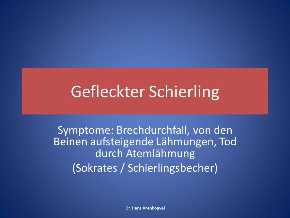 Gefleckter Schierling Symptome: Brechdurchfall, von den Beinen aufsteigende Lähmungen, Tod durch Atemlähmung (Sokrates / Schierlingsbecher) Dr. Hans A
