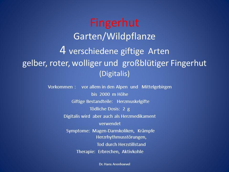 Fingerhut Garten/Wildpflanze 4 verschiedene giftige Arten gelber, roter, wolliger und großblütiger Fingerhut (Digitalis) Vorkommen : vor allem in den