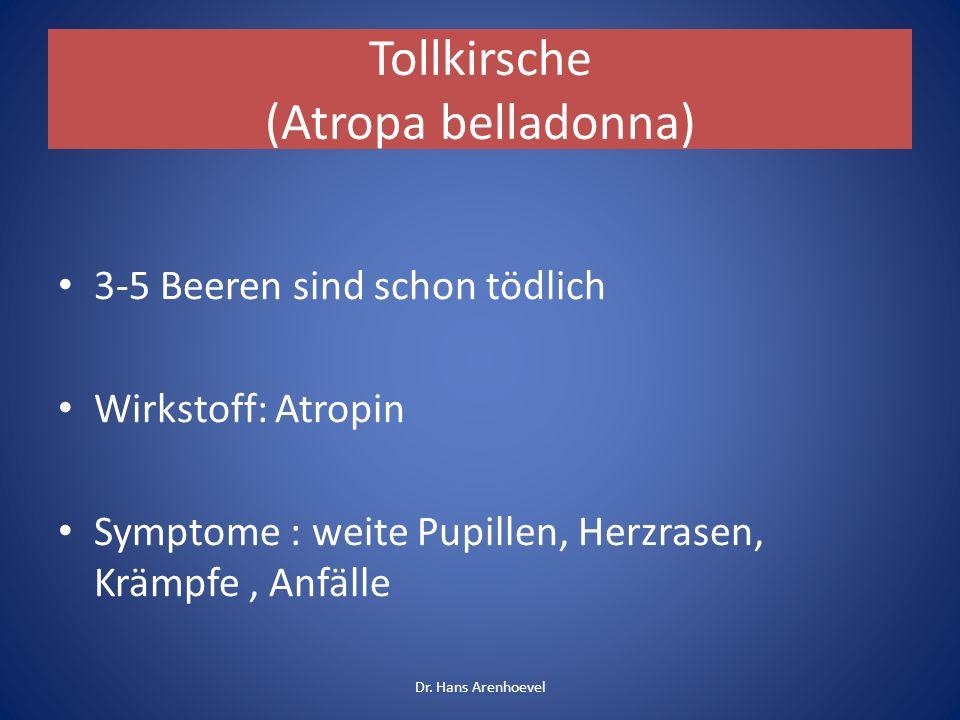 Tollkirsche (Atropa belladonna) 3-5 Beeren sind schon tödlich Wirkstoff: Atropin Symptome : weite Pupillen, Herzrasen, Krämpfe, Anfälle Dr. Hans Arenh