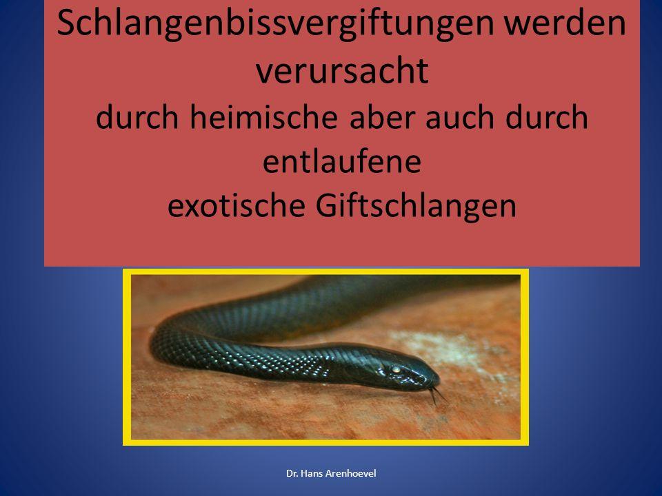 Schlangenbissvergiftungen werden verursacht durch heimische aber auch durch entlaufene exotische Giftschlangen Dr. Hans Arenhoevel