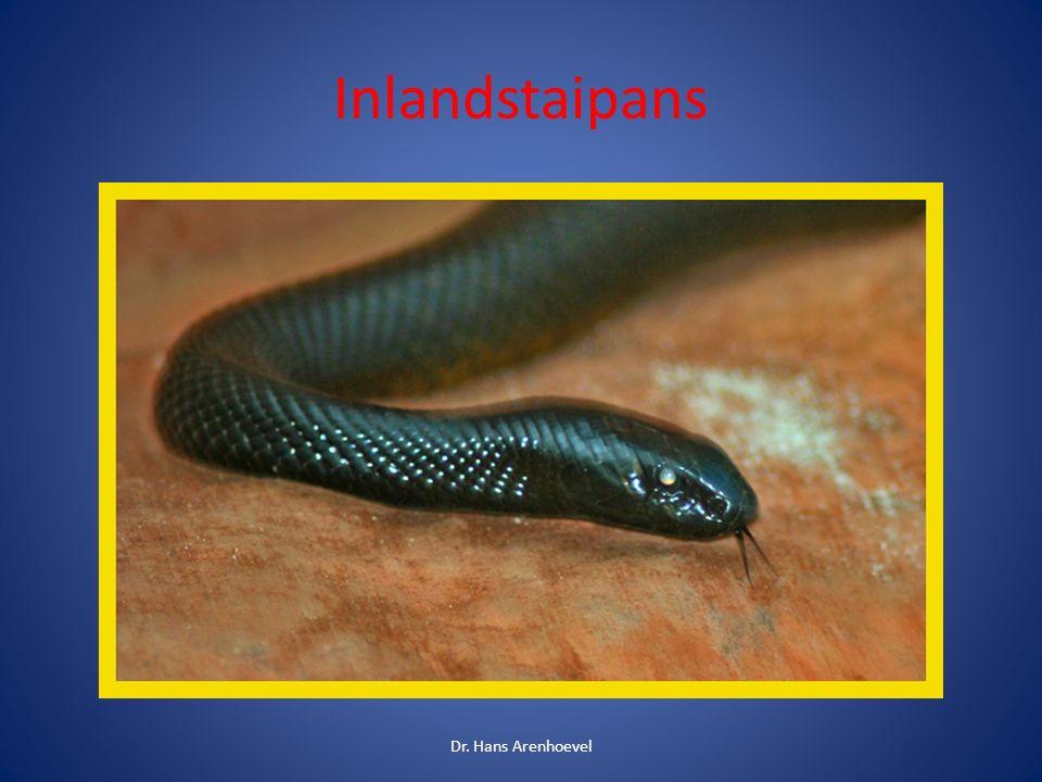 Das Gift des Inlandstaipans ist das stärkste Schlangengift der Welt Vorkommen in Australien Das Gift eines Bisses reicht aus um 250 Menschen zu töten