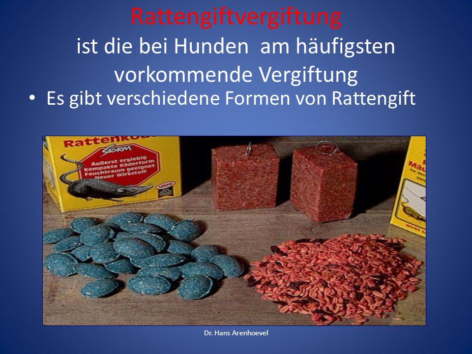 Rattengiftvergiftung ist die bei Hunden am häufigsten vorkommende Vergiftung Es gibt verschiedene Formen von Rattengift Dr. Hans Arenhoevel