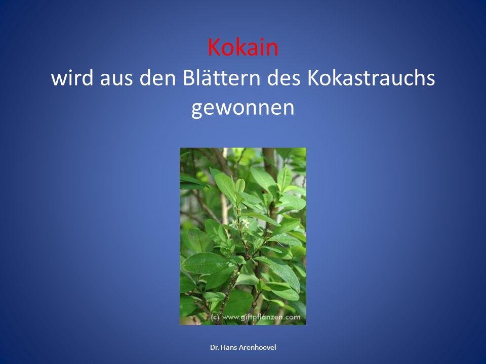 Kokain wird aus den Blättern des Kokastrauchs gewonnen Dr. Hans Arenhoevel