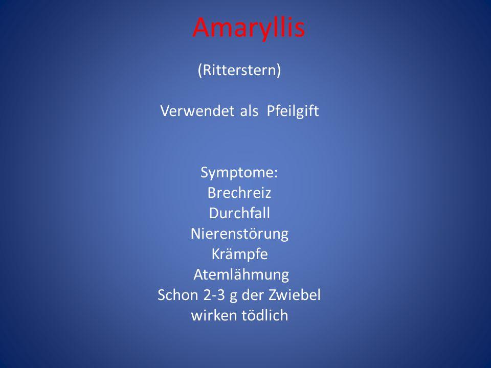 Amaryllis (Ritterstern) Verwendet als Pfeilgift Symptome: Brechreiz Durchfall Nierenstörung Krämpfe Atemlähmung Schon 2-3 g der Zwiebel wirken tödlich