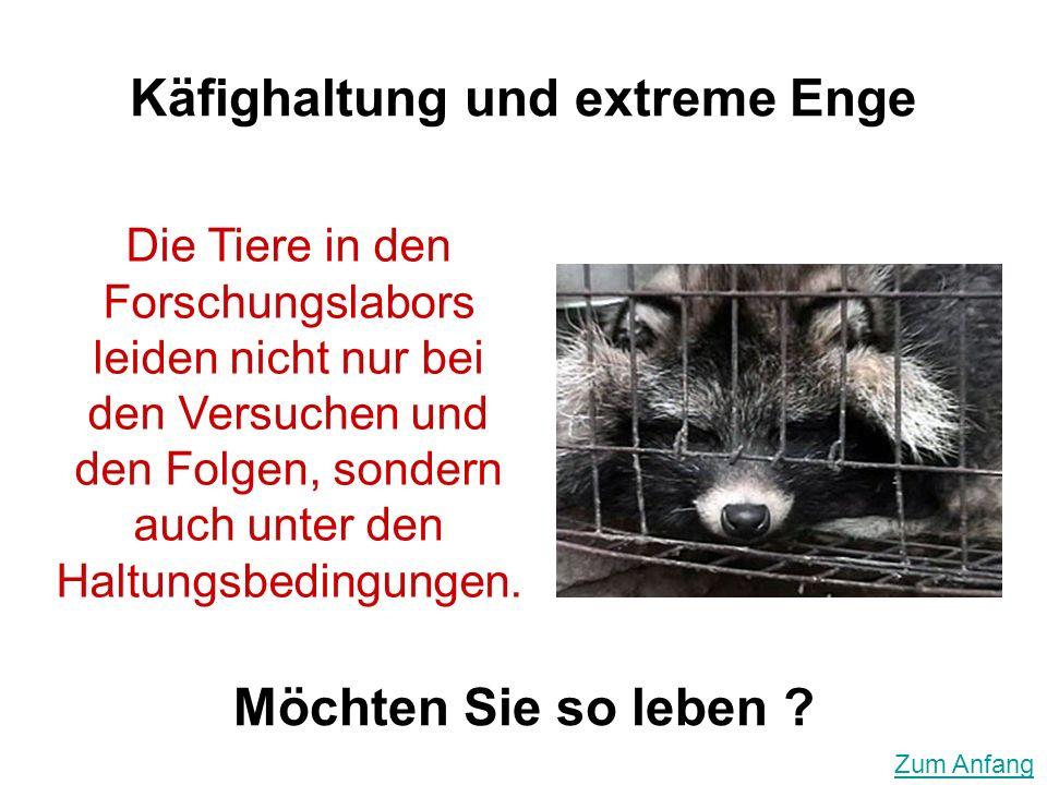 Möchten Sie so leben ? Die Tiere in den Forschungslabors leiden nicht nur bei den Versuchen und den Folgen, sondern auch unter den Haltungsbedingungen
