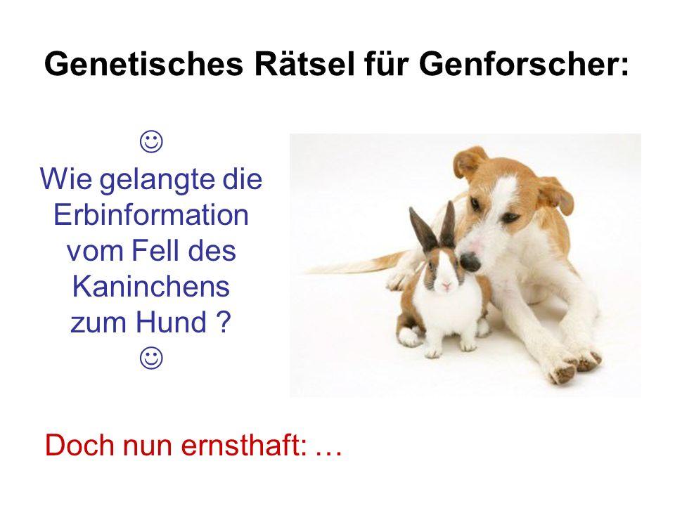 Genetisches Rätsel für Genforscher: Doch nun ernsthaft: … Wie gelangte die Erbinformation vom Fell des Kaninchens zum Hund ?