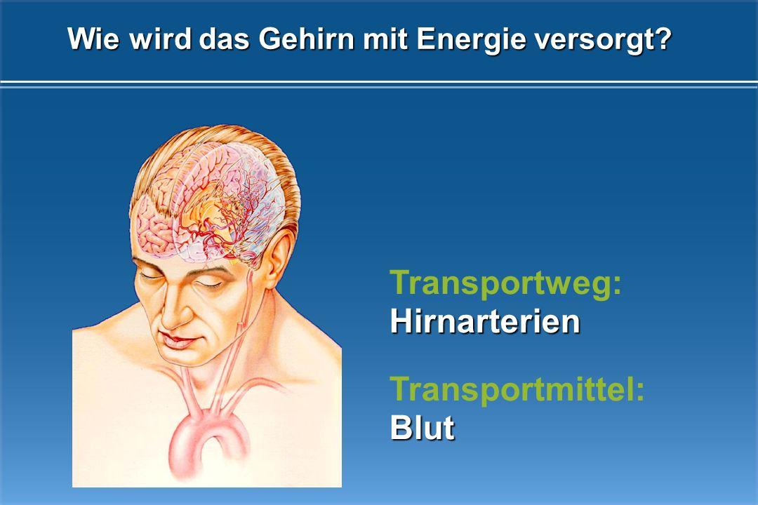 Das Gehirn ist die Schaltzentrale des Organismus Gedächtnis Sprech- bewegungen Körperbewegungen Sehen Hören Sprachverständnis Antrieb, Motivation, Tät