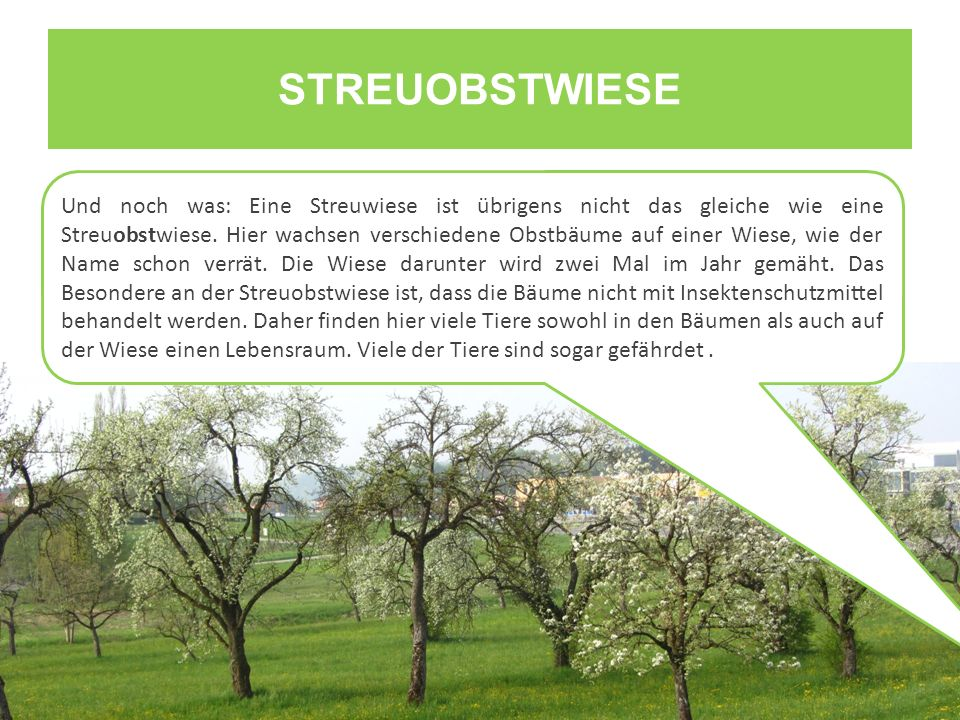 STREUOBSTWIESE Und noch was: Eine Streuwiese ist übrigens nicht das gleiche wie eine Streuobstwiese. Hier wachsen verschiedene Obstbäume auf einer Wie