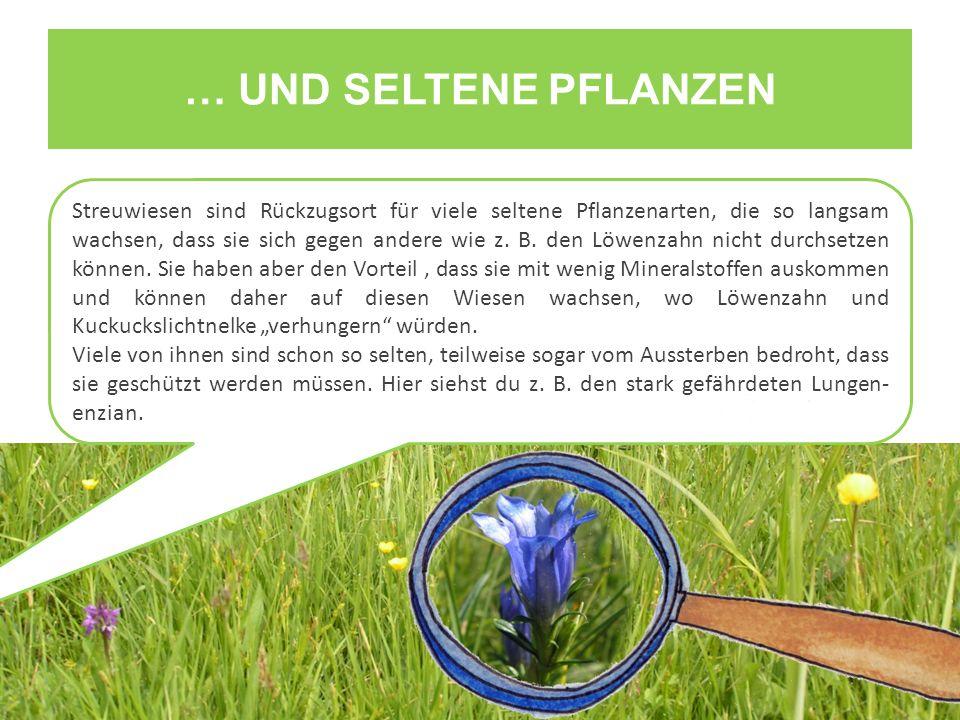 … UND SELTENE PFLANZEN Streuwiesen sind Rückzugsort für viele seltene Pflanzenarten, die so langsam wachsen, dass sie sich gegen andere wie z. B. den