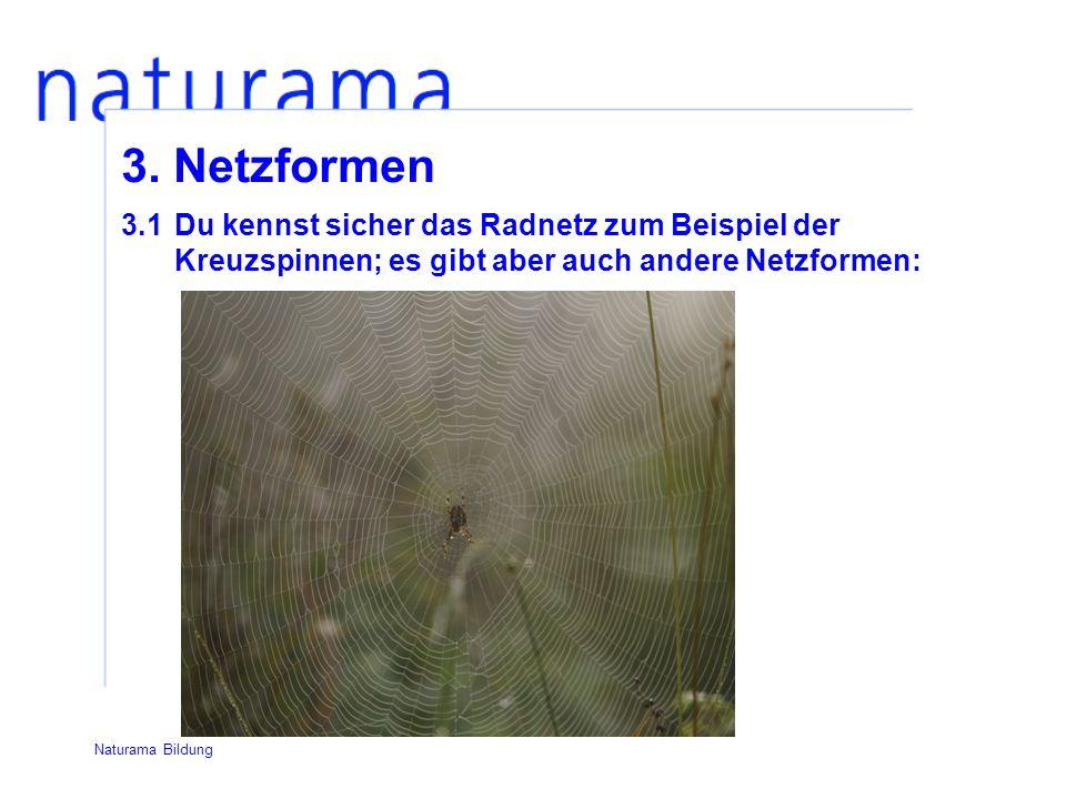 3.1Du kennst sicher das Radnetz zum Beispiel der Kreuzspinnen; es gibt aber auch andere Netzformen: 3.
