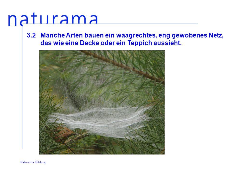 3.2Manche Arten bauen ein waagrechtes, eng gewobenes Netz, das wie eine Decke oder ein Teppich aussieht.