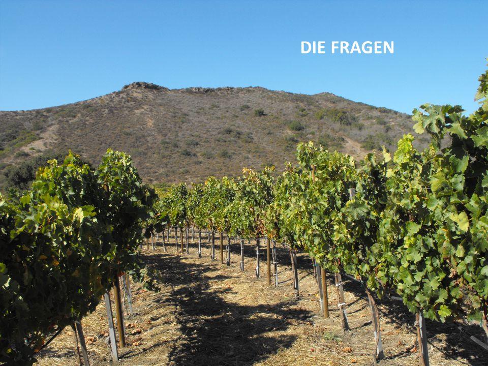Die Fragen: 1: Wie lässt sich der gute Ruf eines Weines als Anreiz für den Besuch eines Gebietes nutzen.