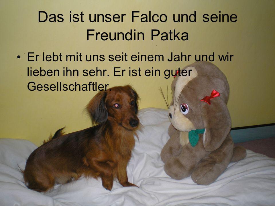 Das ist unser Falco und seine Freundin Patka Er lebt mit uns seit einem Jahr und wir lieben ihn sehr.