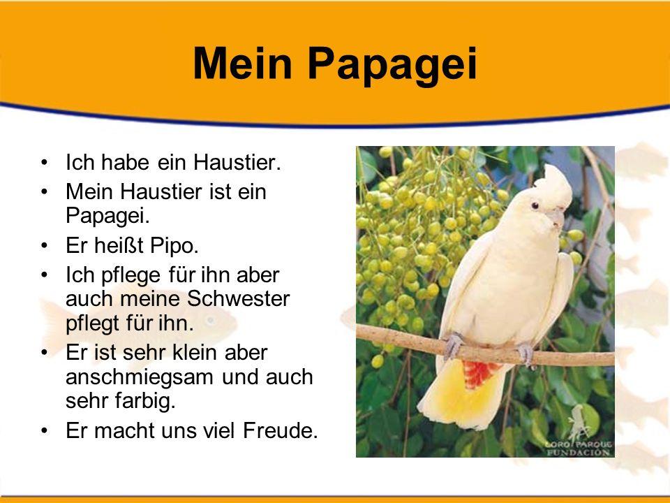 Mein Papagei Ich habe ein Haustier.Mein Haustier ist ein Papagei.