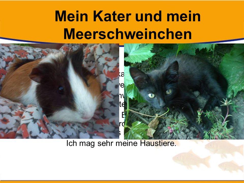 Mein Kater und mein Meerschweinchen Ich heiße Veronika Hamráková und ich habe zwei Haustiere.