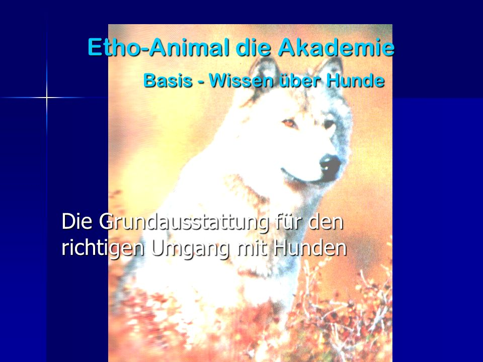Etho-Animal die Akademie Basis - Wissen über Hunde Die Grundausstattung für den richtigen Umgang mit Hunden